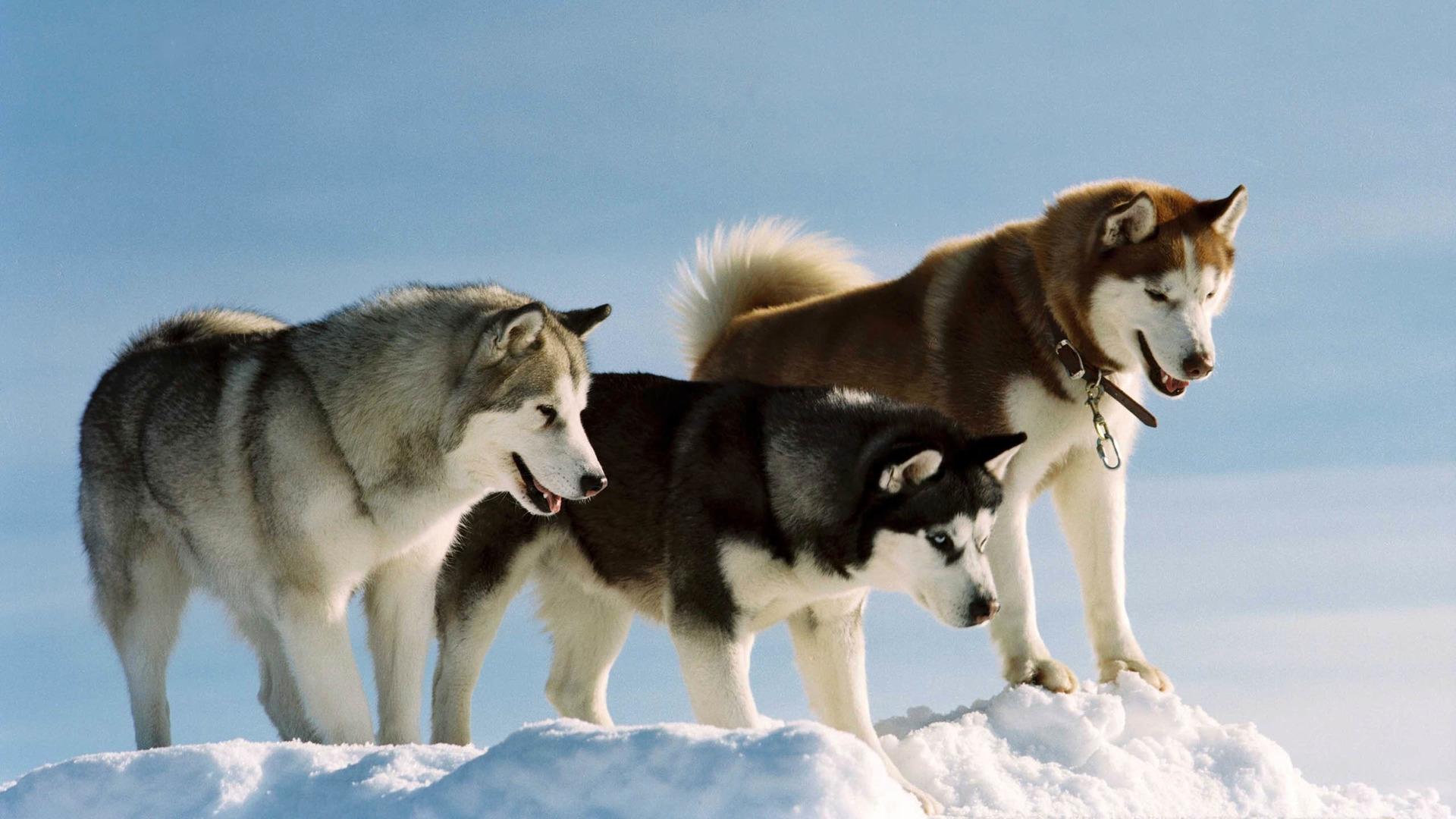 可爱狗狗高清图欣赏